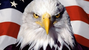 eagle.jpg_1718483346